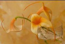 Exceptional Orchid / http://orchidsinfo.eu/en/consument/the-orchid/exceptional-orchid/