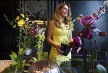 Internationale Dag van de Orchidee 2015 / Op donderdag 3 september 2015 werd de Internationale Dag van de Orchidee gevierd. Voor het eerst vond er die dag de inspirerende Route van de Orchidee plaats in Amsterdam. Verschillende locaties, merken en artiesten brachten die dag een ode aan de orchidee. Een selectie van meer dan 25.000 soorten orchideeën in vele soorten en kleuren was te bewonderen in en rondom de Amsterdamse 9 Straatjes.