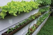 Gardening  / by PatioSocial