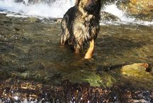Animals / Big Cats-Dogs-Deer-Other Wild Animals / by Kenzie Neumann