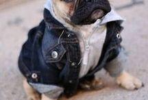 Dressed up Pets