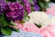 Garden Glory / by Lorraine Williams