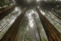 Secret Forests