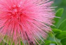 Pink flowers / All sort of flowers in there own special pink way :-)