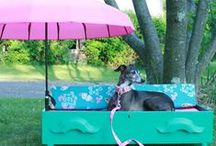 ANIMALS- stuff for furbabies / For Titan, Lilly, Pepper and Libby! / by Michelle Underwood