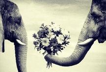 Romance & Life / by Francie Boker