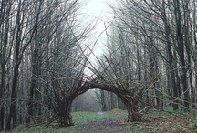 Land Art and Installations / Creativity, nature, and art combine in these Land Art and Installations.  / by Longwood Gardens