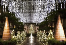 A Longwood Christmas / We'll put the stars in your eyes this holiday season as you wander through half a million twinkling lights, thousands of poinsettias, and magnificent Christmas trees. Beautifully lit fountains dance in our starry holiday wonderland, and concerts are presented daily. / by Longwood Gardens
