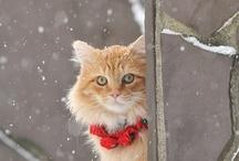 winter ;)