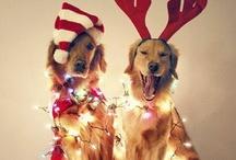 Merry Christmas ideas...