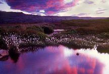 Nature / Beautiful nature / by Sara Keaty