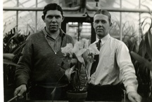 From Our Archives / A collection of some of our favorite historic photos  / by Longwood Gardens