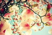 Cherry Blossoms - Delicate Beauty / by Catrina Morris