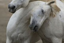 Ponies  / by Sara Keaty