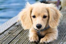 Puppies / by Sara Keaty