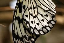 Bugs Butterflies Reptiles Amphibs / by Sara Keaty