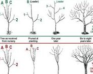 Garden: Pruning / How to prune different plants/trees in the garden