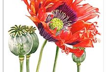 Botanical Drawing/Art / by Terry Dryden
