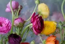~ Les Fleurs ~