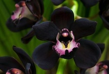 orchids and their growers, info