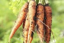 organic gardening / Gardening is wonderful. Organic Gardening is even better. Here are our top finds for growing healthy, fresh food & plants. / by Green Child Mag