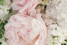 Peony Pink Wedding / by Stoneblossom Floral and Event Design