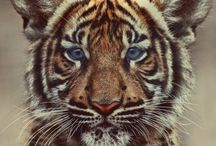 Animals / Cute and exotic animals. / by Heather Denise