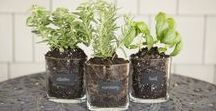DIY: Recycled Jar Ideas / Go green and reuse our glass oval jars for storage, decorating or gardening!