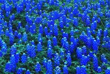 Blue / My favorite color :D / by Heather Denise