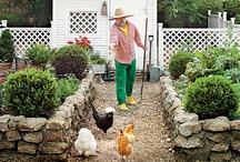 chickens.tracy porter.poetic wanderlust / ..........~ live your poetic wanderlust~ xx tracy porter