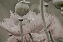 fleur.tracy porter.poetic wanderlust / ..........~ live your poetic wanderlust~ xx tracy porter
