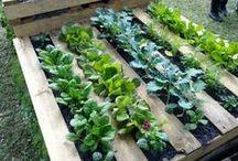 Gardening/Outside house ideas