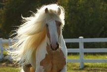 Horses / Allivet is all about horses! Find the best deals on horse medication, horse products, horse vaccines, horse supplements, and much more- lowest price guaranteed! Buy with confidence from our Vet VIPPS trusted pet pharmacy since 1992! Get fast, FREE shipping right to your doorstep on orders $49+