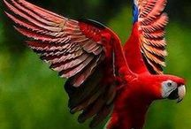 Rojo!