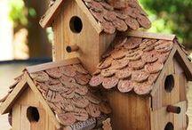 Pájaros / birds