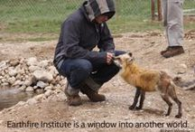 Retreats at Earthfire Institute / by Earthfire Institute: Wildlife Sanctuary and Retreat Center