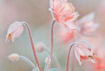 BOUQUET / Des fleurs pour chaque moments de la vie
