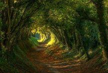 Nature / Évasion verte, magie des couleur, amour des paysages, ce que la terre offre de plus merveilleux