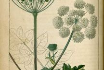 Planches de botanique