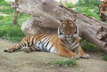Fotos mias Animales / Mis fotos de animales en zoo y libertad / by Escuela en la Nube