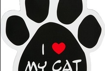 Cats, Cats, Cats and other cute animals