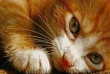 Kitty love / I have been a cat owner since 1987. First it was Popeye then Poppi and now Popcat. All were ginger cats. They all looked alike, but had/have much different personalities