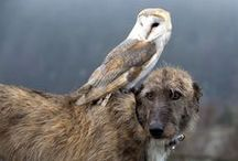 beautiful dogs / Lurchers, Deer Hounds, Wolf Hounds, Labradoodles, Beautiful Dogs,