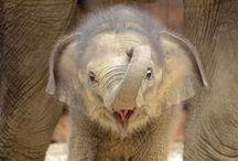 Animals, Wonderful Animals