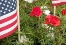 Holidays / holiday decor: Fourth of July, Thanksgiving, Christmas