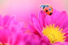 Le Fleurs et Végétation / by Janée R
