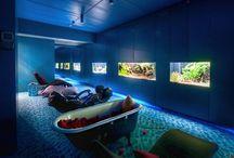 Fishy Fishy | Aquariums / #aquariums #fish / by Fiona M