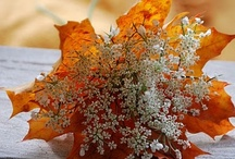 Fall  / My favorite season.