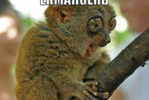 Funny!!!!!!  / by Kelcy Drumm