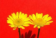 I kind of love flowers